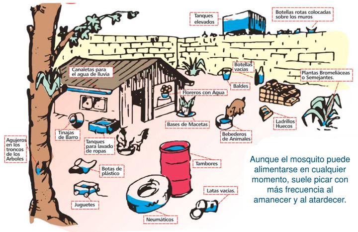 previniendo-los-criaderos-de-dengue
